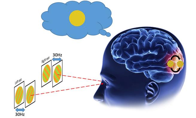 """2016年6月27日,美国科学院院刊在线发表了中国科学院生物物理所研究员、中国科学院大学博士生导师何生与张朋最新的合作研究成果。论文题目为""""Binocular rivalry from invisible patterns"""",该研究揭示了人脑在意识下处理冲突的视觉信息的神经机制。张朋课题组的中国科学院大学研究生邹金佑同学为论文的第一作者,何生与张朋研究员为论文的通讯作者。 人脑通过处理视网膜接收到的复杂图像信息解读周围的视觉环境。在很多情况下,大脑得到的视觉信息是矛盾的或不充分的,"""