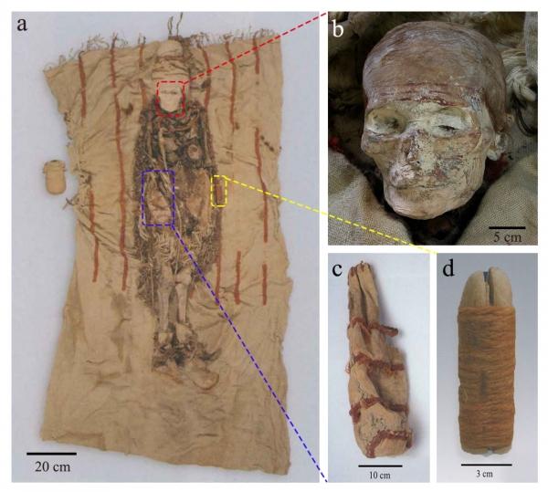 图1. 墓M13出土干尸及随葬物品 (a). 女性干尸正面观及随葬品;(b). 干尸面部的红色彩绘 (;c). 皮囊;(d). 木祖。 皮囊放置于干尸腰部右侧(用蓝框标示),木祖放置于左侧(用黄框标示),木梳压于右侧臀部下方(正面观上未见)。